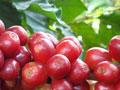 caffe-grani